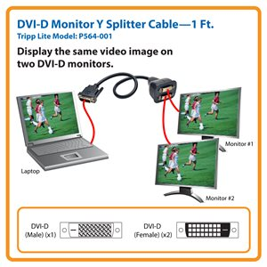 1 ft. DVI-D Y Splitter Cable Displays Same Video Image on 2 Different Monitors