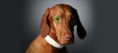 Real-time Eye AF for Animals reliably tracks wild animals and pets<sup>14</sup>