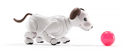 Accessories that spice up playtime with aibo.